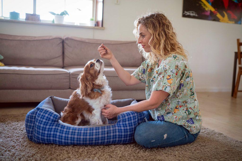 טיפול בכלב בביתו