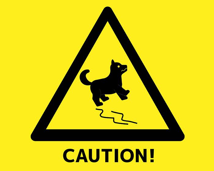 a dog sliding on a slippery floor